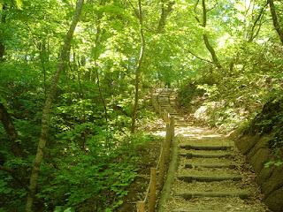 白神山地 十二湖の森