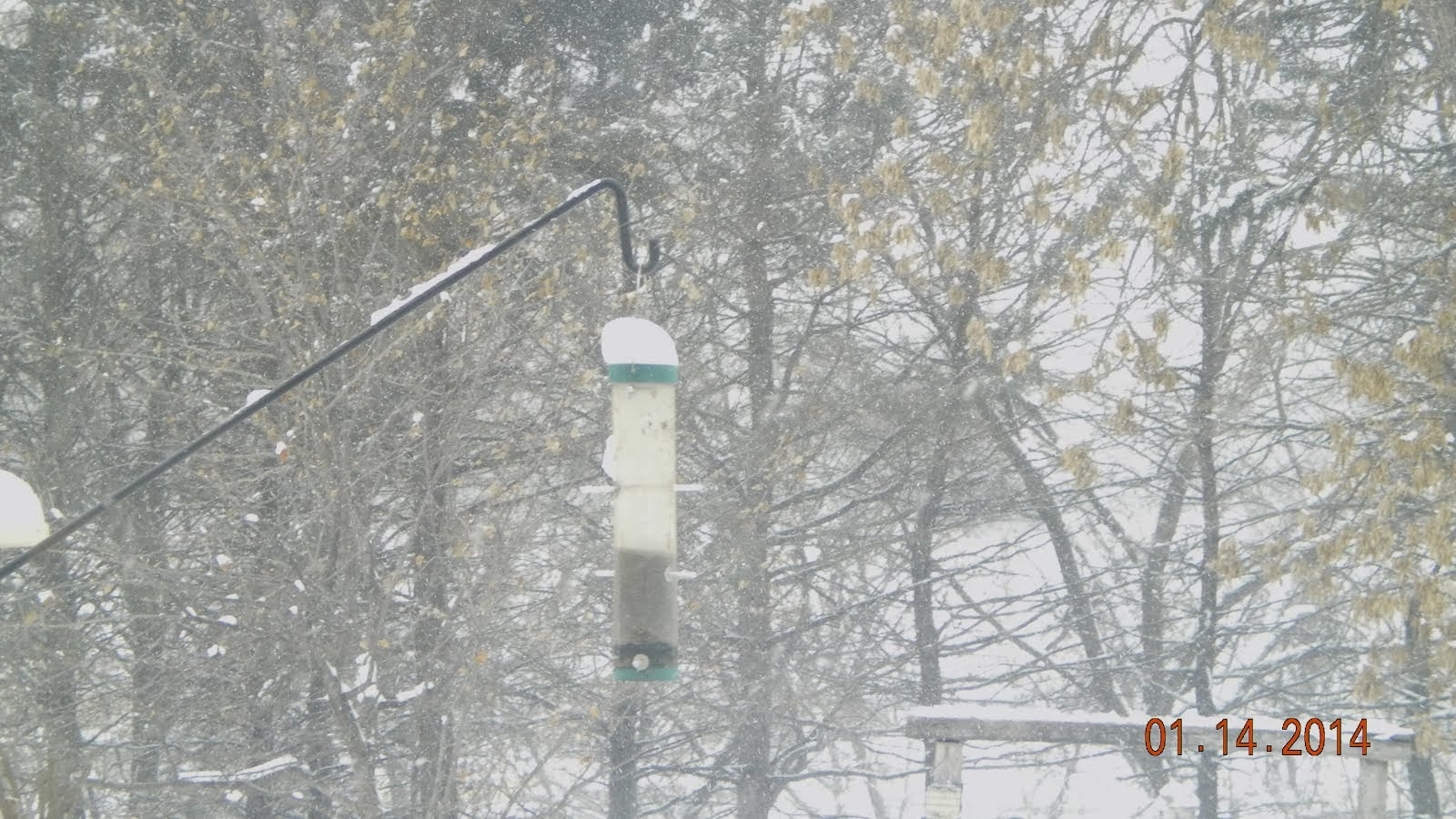 3 inches overnight, atop thistle feeder