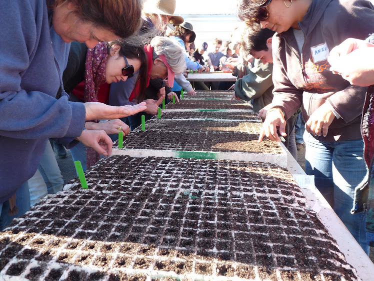 Seed Planting on St. Bridget's Day