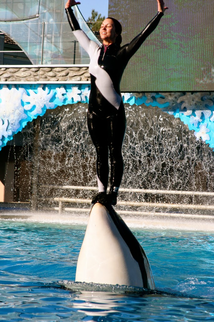 Sea World trainer rides orcas