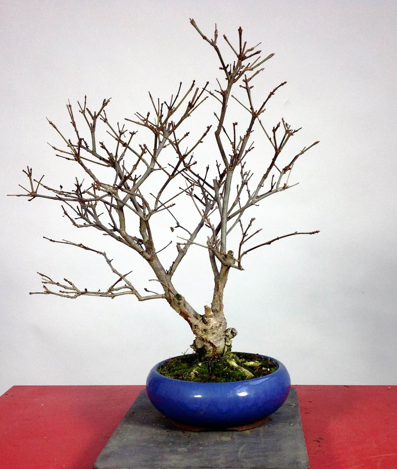 Saruyama Blog February 2013