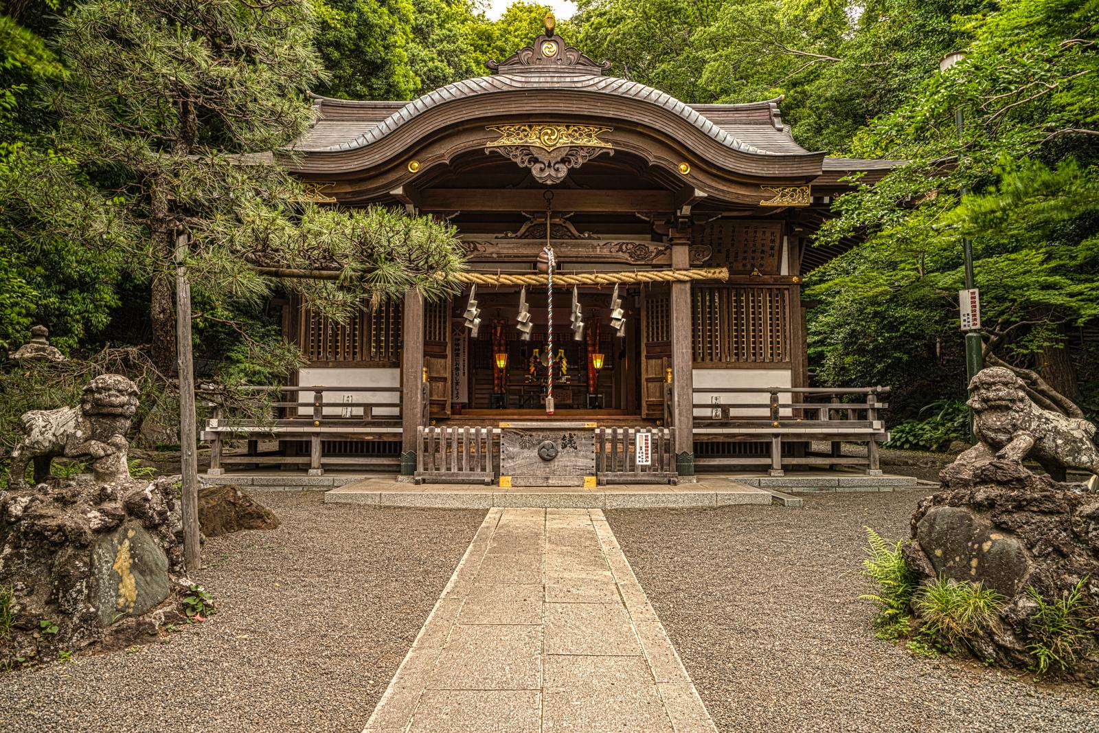 貫井神社、狛犬と桧造りの本殿の写真