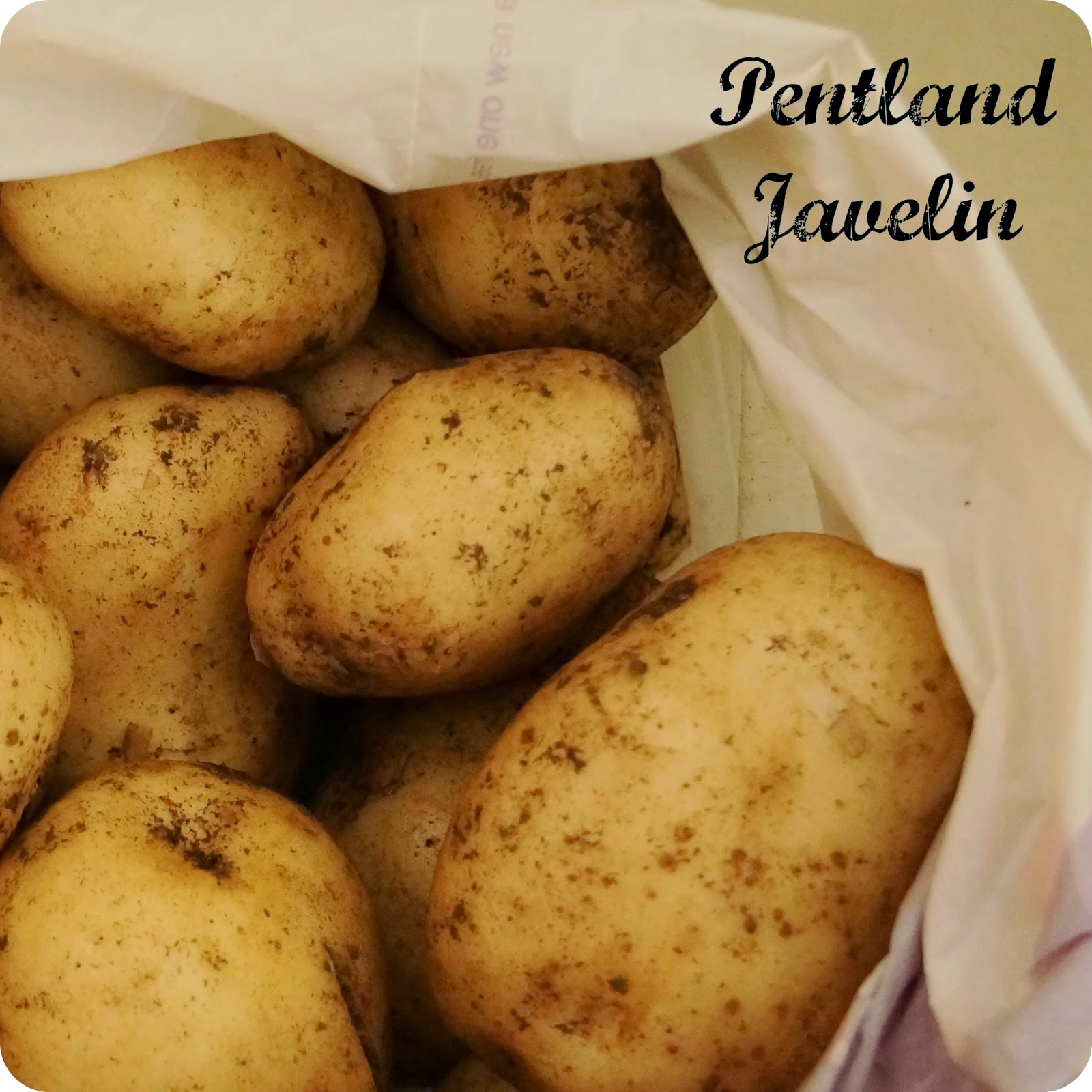 Pentland Javelin Potatoes - 'growourown.blogspot.com' ~an allotment blog