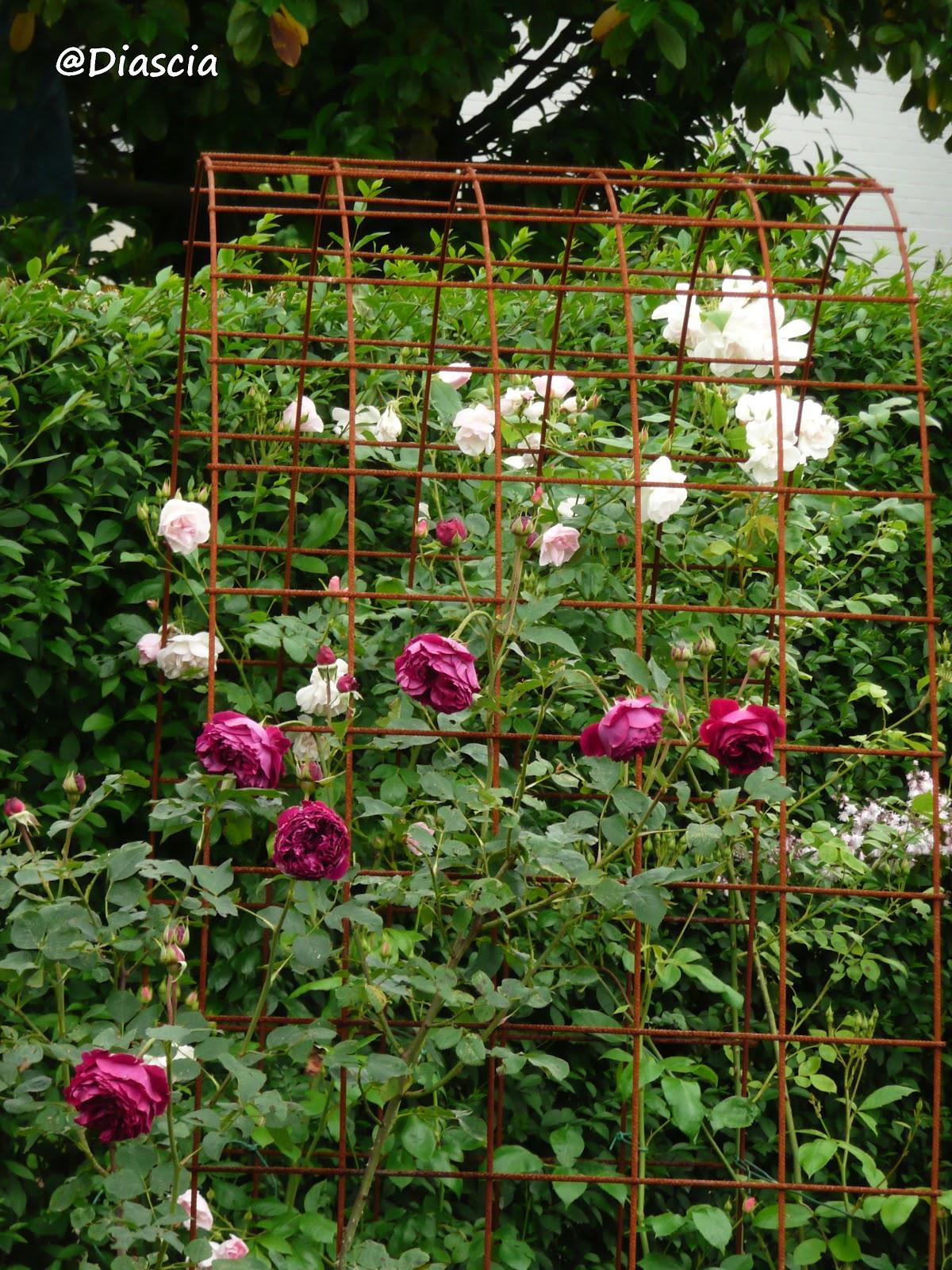 Le Jardin De Diascia Structures En Fer A Beton