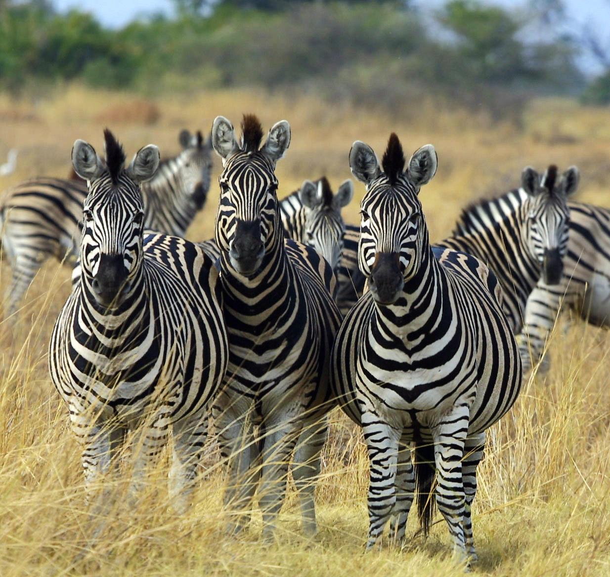 good church design: Church Design Zebras