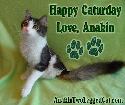 Happy Caturday Love Anakin The Two Legged Cat
