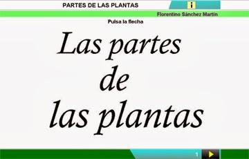 http://cplosangeles.juntaextremadura.net/web/edilim/curso_2/cmedio/plantas02/partes_planta02/partes_planta02.html