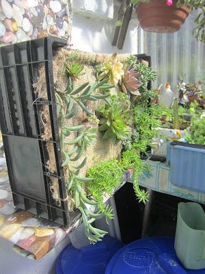 Manualidades puri diaz jardin vertical reciclando for Jardin vertical reciclado