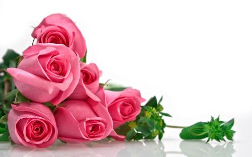Fotos de rosas y arreglos florales para el 10 de Mayo