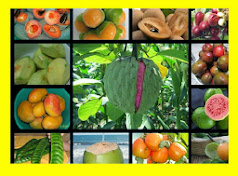 Conosca Nuestro Pais Es Fabuloso Frutas de El Salvador Prohibido Olvidarse