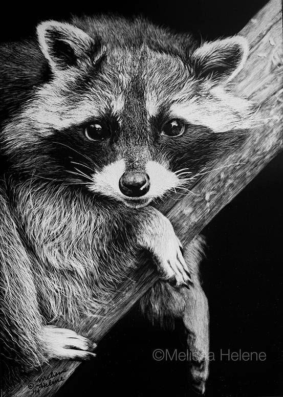 05-Raccoon-Melissa-Helene-Amazing-Expressions-in-Scratchboard-Animal-Portraits-www-designstack-co