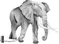 elefante e a estaca