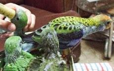 Aves - Os Bicos