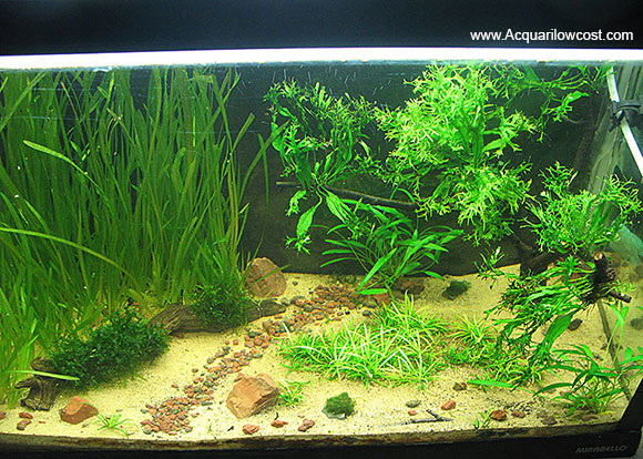 acquarilowcost acquario 80 litri la quercia
