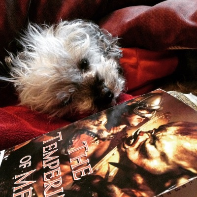 Murchie sprawls in a red blanket cave so only his face and the very top of his torso are exposed. Even his paws are tucked away. He wears his orange shirt. In front of him is a paperback copy of The Tempering of Men. Its cover features an inhuman creature attacking an armoured white man and a snarling brown wolf.