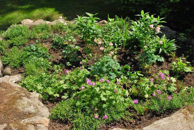 Muonamiehen mökki - Uuden mummonmökki-tyylisen kukkamaan kasvit