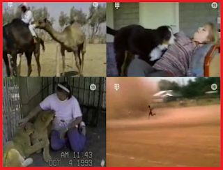 Home videos, funny videos, animals, people, sports, tapandaola111
