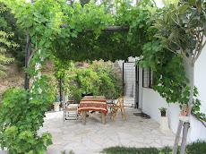 Parras de uva moscatel en el porche
