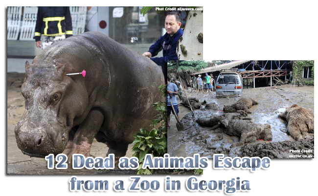 12 Dead as Animals Escape from a Zoo in Georgia