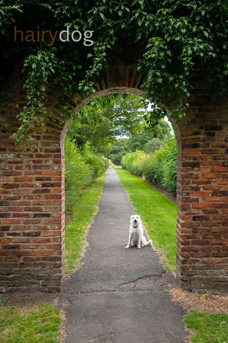 dog photography by hairy dog in sunderland, doxford