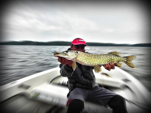 séjour pêche suede brochet