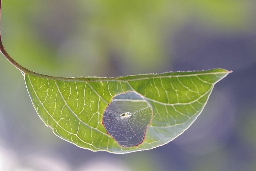 The 100 best photographs ever taken without photoshop - This is what happens when a spider and a leaf get together