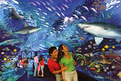 Cut Your Vacation Cost With Myrtle Beach Aquarium Coupons
