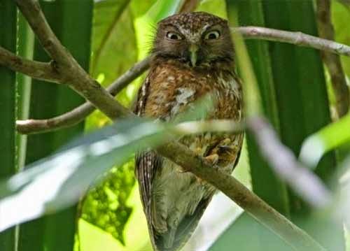 Cara Merawat Burung Hantu Dengan Baik