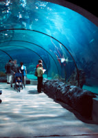Sea Life Aquarium Underwater Tunnel