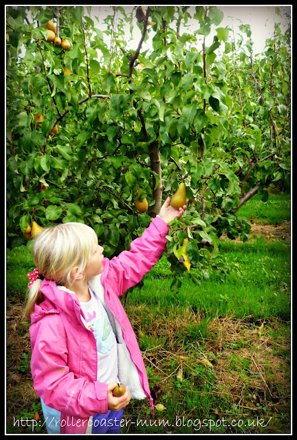 Pick your own day, Blackmoor Estate
