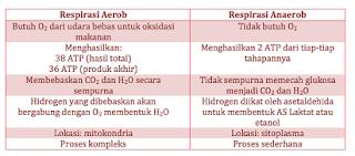perbedaan bakteri aerob dan anaerob,pengertian respirasi aerob,