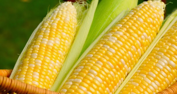 Amazing Thing You Should Know About Corn