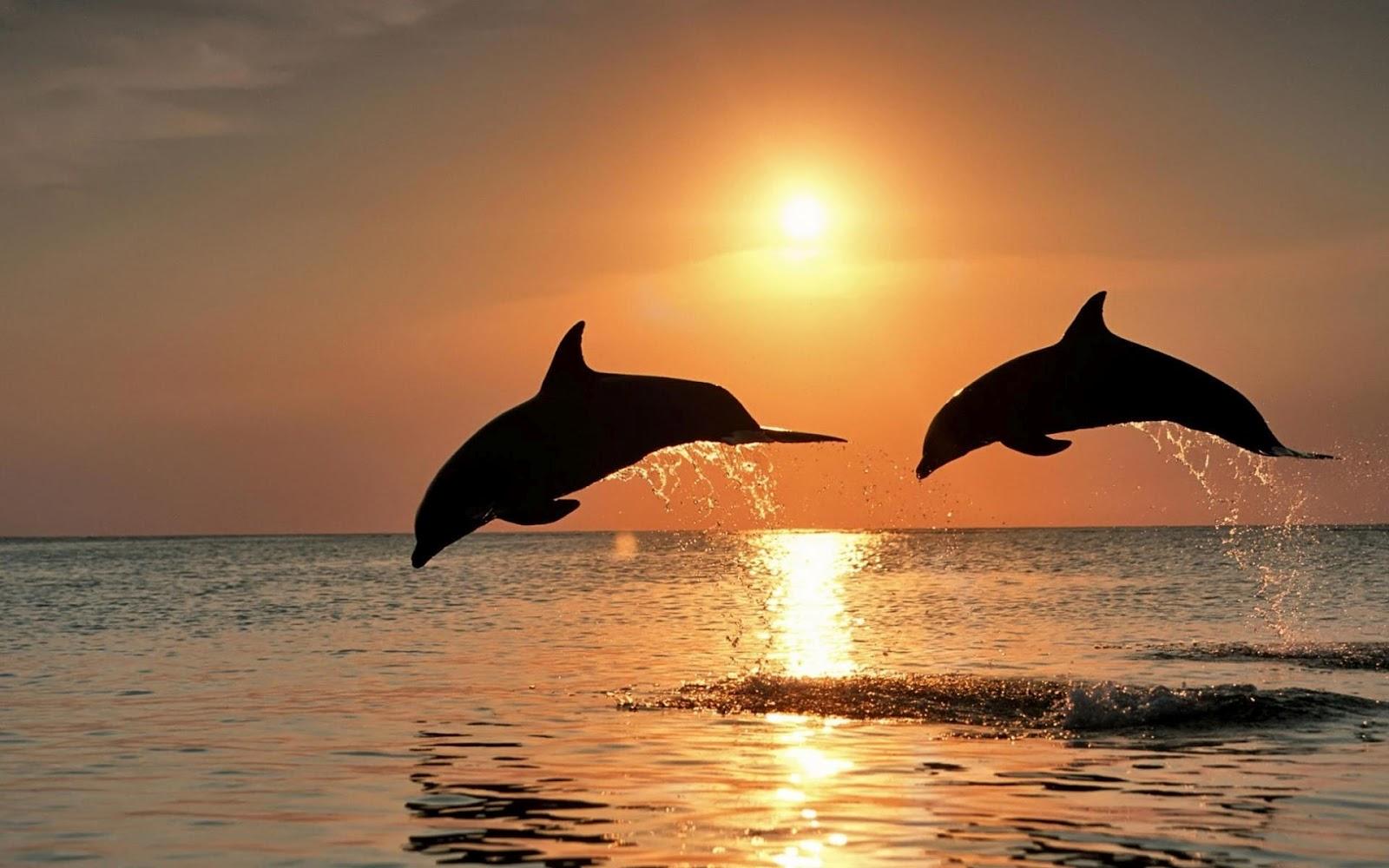 animales marinos imagenes - Descargar fotos animales marinos Softonic
