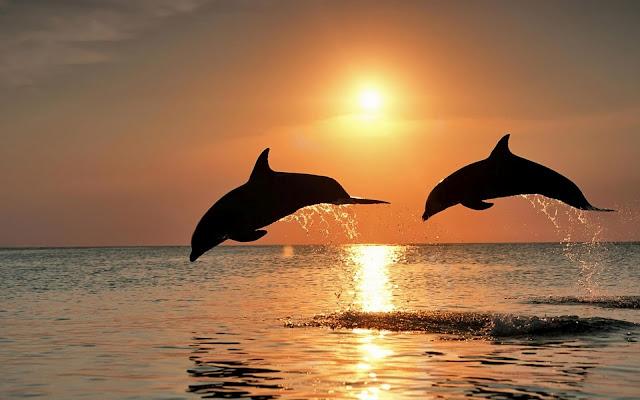Animales Marinos Pareja de Delfines al Atardecer