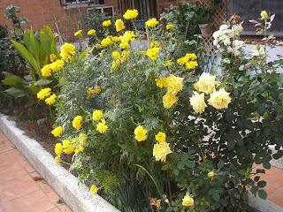 el jardin de pepa arbustos herbaceas anuales