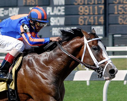 photo of the horse with jockey racing at a horse race