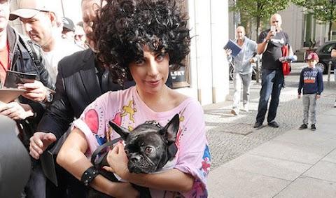 lady gaga e asia lanciano una linea di prodotti per cani