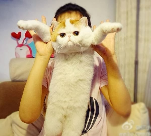 Snoopy the Cute Cat, from China who lives in the city of Chengdu.