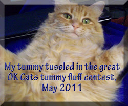 2011 Tummy Contest