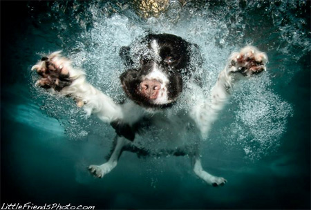 Amazing Underwater Dog Photography