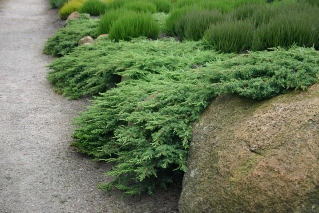 Arte y jardiner a dise o de jardines juniperus elegancia for Diseno de jardines 3d 7 0 keygen
