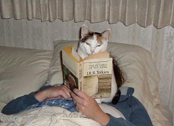 Как коты читают книги (10 фото)