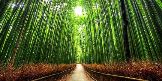 Pohon adalah organisme yang paling bisa bertahan lama di bumi. sebagai