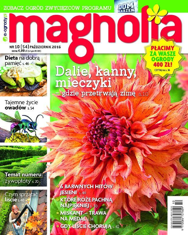 Magnolia Nr10 (54) PAŹDZIERNIK