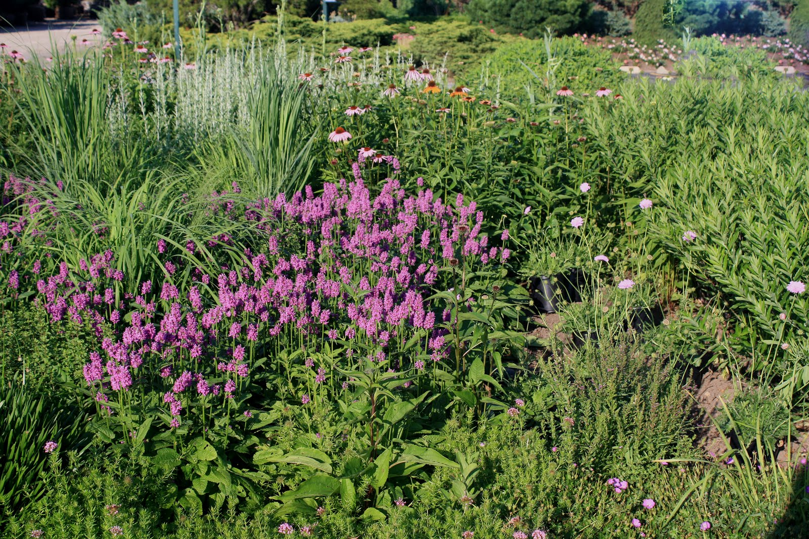 Midwest groundcovers display gardens plant trials piet for Piet oudolf planting schemes