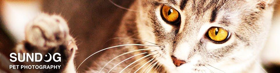 Sundog Pet Photography