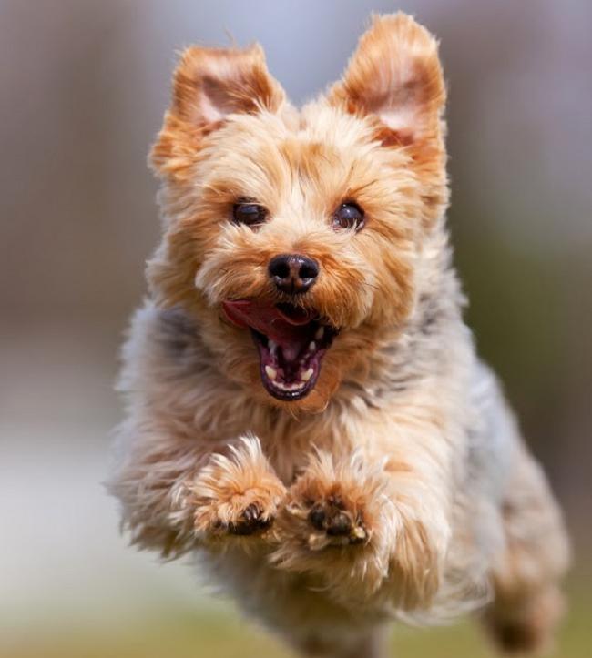 Żywienie psów aktywnych fizycznie