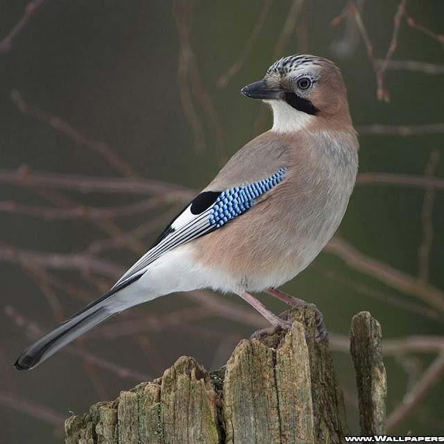 gambar burung cantik
