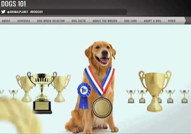 http://animal.discovery.com/tv-shows/dogs-101/videos/golden-retriever.htm
