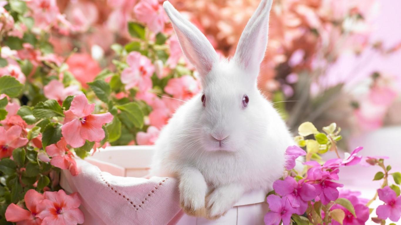 wallpaper: cute rabbit wallpaper